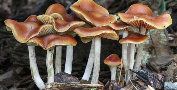 Investing in Psychedelics, Plant Consciousness, and Mental Health